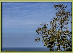 Overlooking the Pacific (Sugardxn) Tags: ocean blue sky tree clouds photoshop canon pacific pacificocean frame laguna picswithframes canoneos7d canon7d sugardxn garypentin