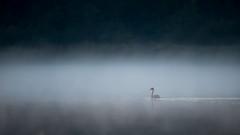 Zondagochtend (3 van 8) (Klaas de Jong) Tags: autumn mist fall nature herfst friesland reigers easterskar