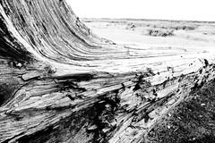 IMG_8174 (elena.barsottelli) Tags: horses horse landscape iceland icelandic islanda