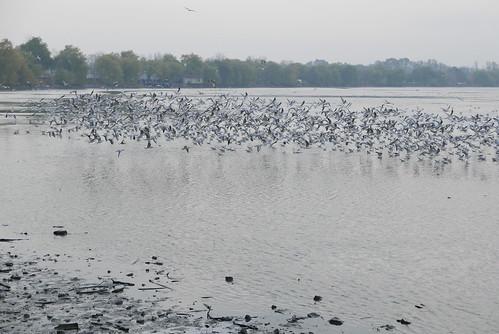 Jistebnik lakes