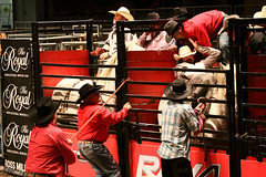 RAWF15 JSteadman 0107 (RoyalPhotographyTeam) Tags: sun royal rodeo 2015 rawf nov08