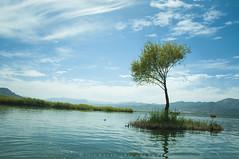 zrebar (naser.shirmohamadi) Tags: sky cloud lake tree water kurdistan naser marivan  zrebar  shirmohamadi