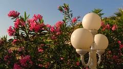 on the hotel grounds IMG_1191 (mygreecetravelblog) Tags: island hotel greece greekislands andros cyclades batsi cycladesislands androsgreece androsisland batsiandros greekislandhotel aneroussabeachhotel batsivillage aneroussahotelandros