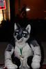 _MG_6011 (GroggyFox) Tags: west fur furry midwest furries fest mid mff fursuit 2015 mwff furfest stubtail mff2015 mwff2015