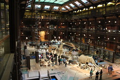 A Showcase of the Diversity of the Animal Kingdom (praja38) Tags: life paris france building nature birds animal museum hall europe european wildlife caps diversity evolution naturalhistory taxidermy skeletons mammals specimen reptiles capricorn grandegaleriedelevolution