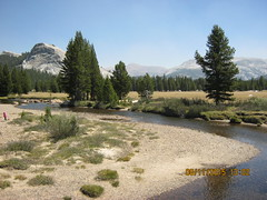 View from  bridge by Parsons Lodge - Tuolumne Meadows  8-11-2015 (Bob_ Perry) Tags: yosemite tuolumne tuolumnemeadows lembertdome tuolumneriver