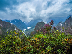 jungle (Marvin Macke) Tags: jungle peru viaje travel trip mountains green beautiful landscape landschaft forest tree latin america