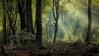 The birth of a fairytale 9 (sergeyashin) Tags: ifttt 500px autumn landscape nature magic fairytale fine art l lightbeam lightfall wallart saskia dingemans speulderforest