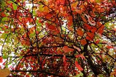 Autumn (RikkiBoom) Tags: autumn fall colorsinourworld colors russia leafes nature