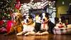 JJJ_1935 (jeffreyjackson414) Tags: dogs fire christmas new zealand heading dog golden retriever pappion fireplace