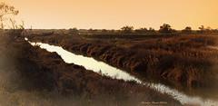 L'eau sauvage (Dominique Dumont Willette) Tags: graminées nature sauvage camargue lessaintesmariesdelamer paca parcnaturel arbustes marais