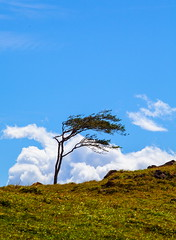 Costa Rica (stevenbulman44) Tags: costarica blue sky tree wind cloud landscape canon 70200f28l lseries polarizer filter