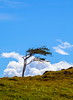 Costa Rica (stevenbulman44) Tags: costarica blue sky tree wind cloud landscape canon 70200f28l lseries polarizer filter