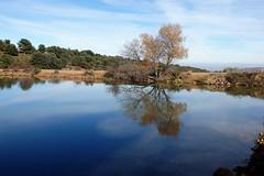 Embalse de San Martín. (Eduardo OrtÍn) Tags: arbol agua embalse aragon provinciazaragoza