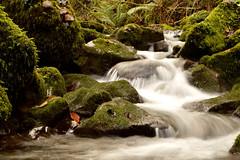 arroyo (Álvaro Iglesias) Tags: bosque rio piedras musgo rocas verde agua arroyo corriente larga exposición river water rocks forest green naturaleza nature stream moss