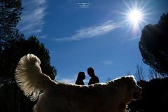 Jc&L (Noelia.vj Fotografía) Tags: novios pareja naturaleza mascota dog perro golden retrevier amor love nikon nikond750 35mm paisaje ©noeliavj 2017