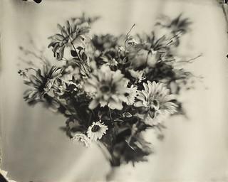 ambrotype - flowers fine art