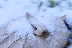 20170107_Gorge_du_Fier (10 sur 14) (calace74) Tags: fier gorgedufier lovagny rhonealpes france gel hiver neige paysage rivière