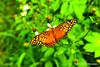 Beautiful Butterfly Queen (Ouraart Photography) Tags: nature beautiful beauty animals butterfly photographer image natureza posing gratitude mothernature perfection natureshots natureart amazingshots lovenatureshots naturevibes ouraart ouraartphotography