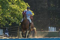 DSC05318_s (AndiP66) Tags: markus fuchs altbron springen dubenmoos solothurn derby 2014 august pferd horse schweiz switzerland kantonsolothurn cantonsolothurn concours wettbewerb horsejumping springreiten pferdespringen samstag saturday 22august2015 2015 cantonofsolothurn contest equestrian sports pferdesport sport sony sonyalpha 77markii 77ii 77m2 a77ii alpha ilca77m2 slta77ii sony70400mm f456 sony70400mmf456gssmii sal70400g2 andreaspeters biberist ch