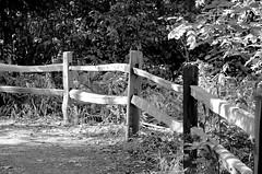 Old and Bold. (Omygodtom) Tags: abstract nature oregon fence outdoors nikon flickr dof explorer edit ceder oaksbottom d7000 nikon70300mmvrlens