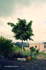 DSC_0001 (Sanches Fotografias) Tags: jardim rvore jardinagem