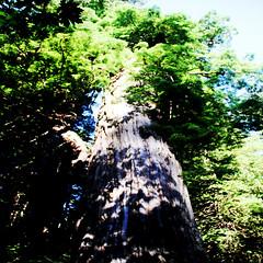04a Orick CA - Prairie Creek Redwoods State Park 15 (Johns Never Home) Tags: california humboldt vineyards redwoods gingerbreadhouses bigtrees ferndale hopland orick weott