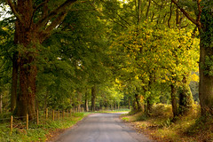 An afternoon with the 50mm............ (Eric Goncalves) Tags: road trees england green forest fence nikon warm afternoon gloucestershire treescape forestofdean nikonnikkor50mmf18g nikond7200