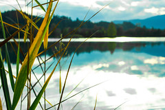 Schilf (michael.taferner) Tags: cloud white lake color green reed water clouds canon watercolor out eos focus wasser background herbst cyan crop kit 1855 schilf aquarell silbersee 600d apsc objekitv