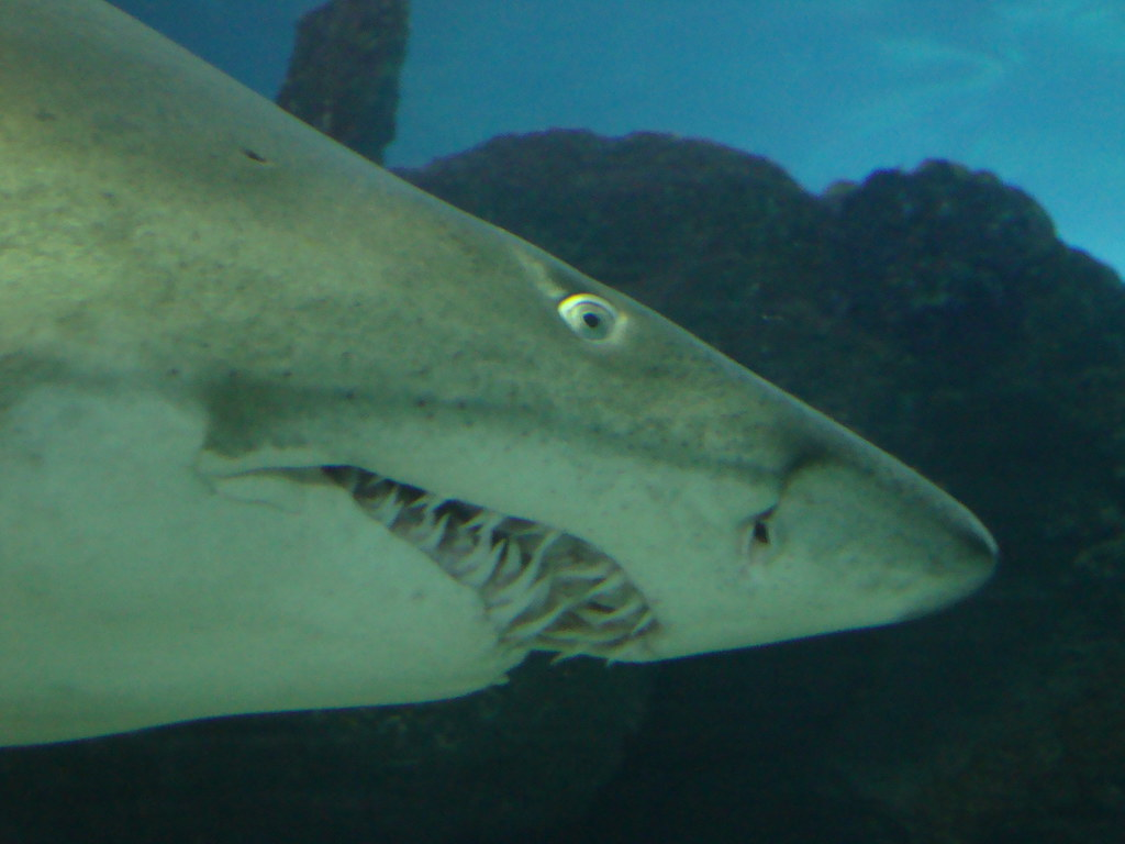 essay on fear of sharks Are sharks as dangerous, as people consider them to  the exception is sharks,  being the embodiment of the ancient fear of being devoured alive by something.