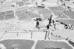 Salineras Maras (naloni_jr) Tags: blackandwhite white peru canon cusco salt pb sal maras 24105mm salinera 5dmkii