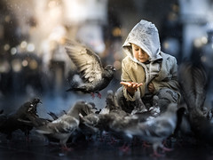pigeons (iwona_podlasinska) Tags: child children kid kids animals birds street pigeons cracov 85mm sony a7 samyang animal bird rain throughherlens