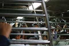 Crowded Mumbai Train Car (AdamCohn) Tags: india train crowd rail railway trains bombay maharashtra mumbai commuterrail crowded adamcohn wwwadamcohncom mumbaisuburbanrailways  jappletrains
