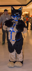 DSC_0050 (Acrufox) Tags: chicago illinois furry midwest december ohare rosemont convention hyatt regency 2014 fursuit furfest fursuiting acrufox mff2014