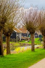 _DML1419 (duncen.mcleod) Tags: windmill ren marken zaanseschans molens paardvanmarken oudehuisjes ren