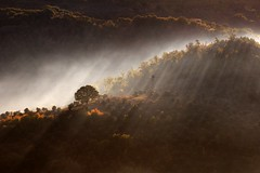 Foschia (luporosso) Tags: autumn trees naturaleza tree nature fog alberi sunrise landscape landscapes nikon ray alba natura nebbia autunno paesaggi paesaggio sunray lazio raggi naturalmente nikond300s
