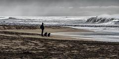 Look-Out ((Virginie Le Carré)) Tags: paysage landscape silhouette océan ocean atlantique atlantic nature contrejour backlight trois tree lookout vigie extérieur outside vagues wave sable sand gironde