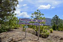 Camino Peatonal de Regreso! / Pedestrian Way Back! (Tato Avila) Tags: colombia boyac villadeleyva pozosazules naturaleza nubes montaas arboles colores clido cielos bosquedepino