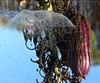 Natur-Regenschirm * Nature umbrellas * Paragua de la naturaleza *   .  P1330403-001 (maya.walti HK) Tags: 111216 2016 copyrightbymayawaltihk decoracióndelanaturaleza flickr natur naturdekorationen naturregenschirme naturaleza nature naturedecorations panasoniclumixfz200 paraguasdelanaturaleza schirme spiderwebs spinnweben telarañas umbrellas