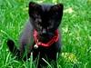 Farrusco (verridário) Tags: gato cat sony animal domestic domestico green negro preto black nero kot 猫 gatto katze 貓 chat γάτα кот kedi hellopussycat