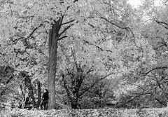 _DSC3916 (purin_cess) Tags: centralpark 2016 autumn 11月 十一月 秋 中央公園 紐約 ny newyork