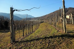 Colline del Prosecco (MarioLaser) Tags: valdobbiadene prosecco hills colline viti veneto treviso