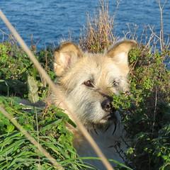IMG_5631 (jesust793) Tags: perros dogs mar hierba mascotas pets