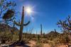 IMG_6395-Bearbeitet (dominikborsch) Tags: tucson arizona usa saguaros saguaronationalpark nature nationpark landscape landschaft desert wüste kaktus cactus