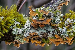 Fungus, Lichen, Moss