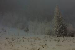 Winter Dream (HLazyJ - Susan Humphrey) Tags: colorado bluemesa canon canon5ds canonllens ©susanhumphrey
