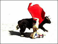 manoletina de rodillas (aficion2012) Tags: arles france francia novillada feria riz septembre 2016 corrida toros toreaux bull bullfight flight leo valadez blohorn jalabert novillo novillos manoletina