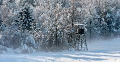 Winter guardian