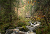 Ravenna Schlucht (HikerandBiker) Tags: autumn blackforest forest gorge herbst hiking outdoor ravenna ravennagorge ravennaschlucht slta99v schwarzwald sigma2470mmf28exdghsm sony sonya99 sonyalpha99 wald wanderung wasser wasserfall wandern
