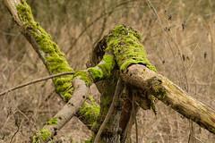 20170104-_IMG0949-Edit (fleetingphotons) Tags: pentaxk1 smcpentaxa200mmf28ed wasingestate fishing warrenbeat kennet trees